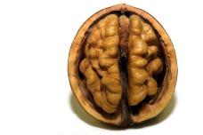 walnut-3072652_1920